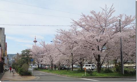 IMG_0010 桜